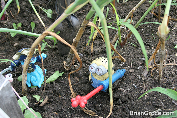 2014-06-30-garlic-1